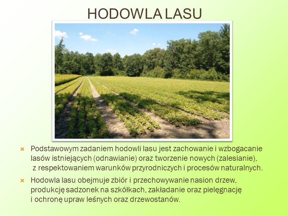 HODOWLA LASU