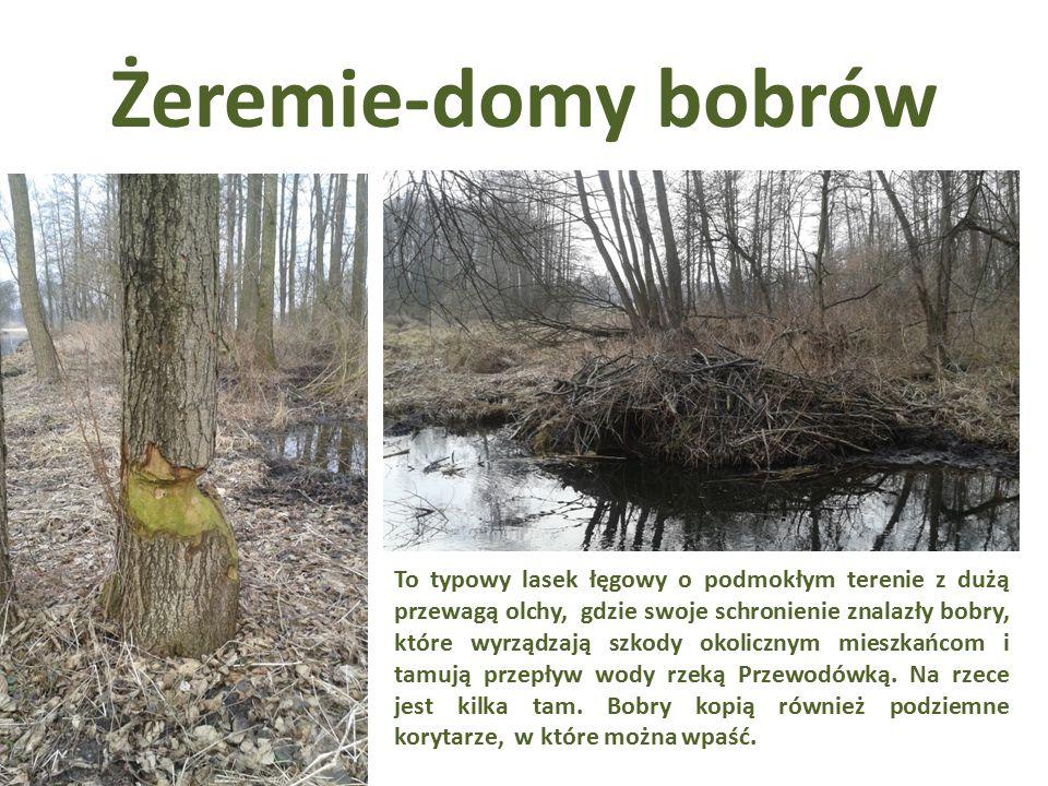 Żeremie-domy bobrów