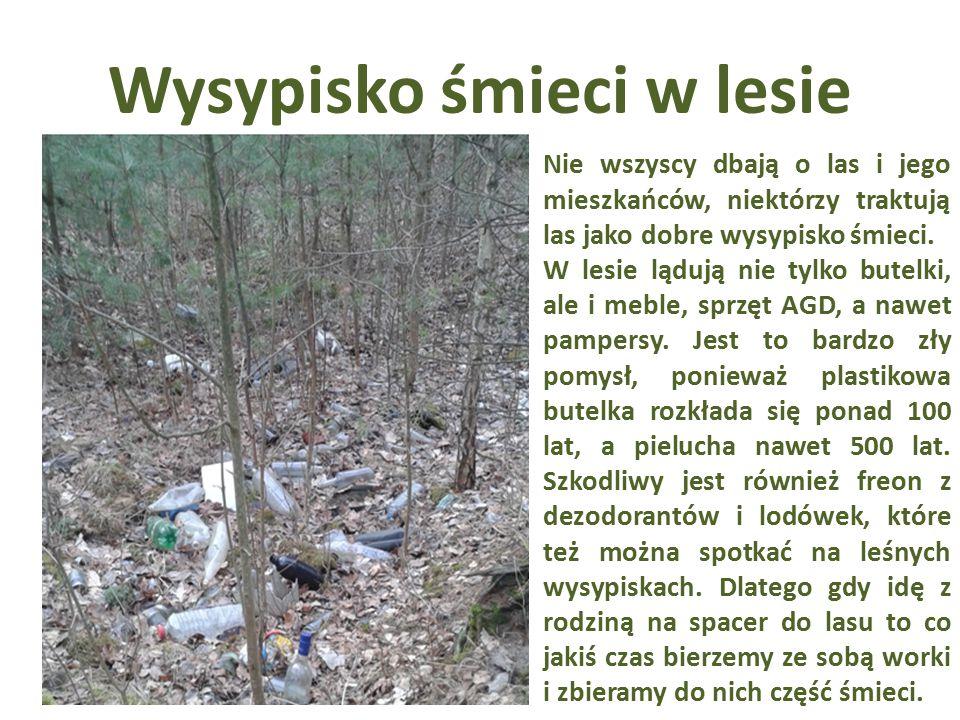 Wysypisko śmieci w lesie