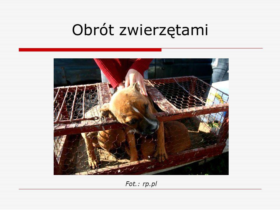 Obrót zwierzętami Fot.: rp.pl