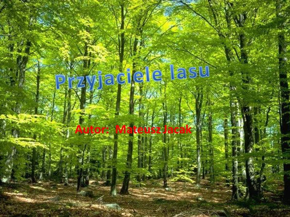 Przyjaciele lasu Autor: Mateusz Jacak