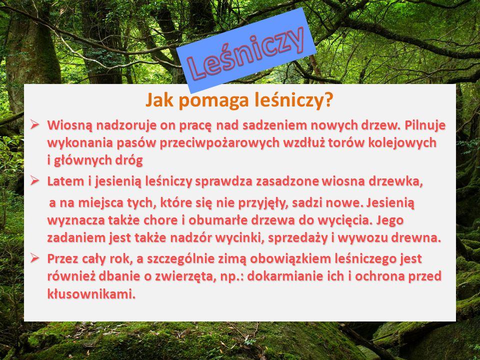 Leśniczy Jak pomaga leśniczy