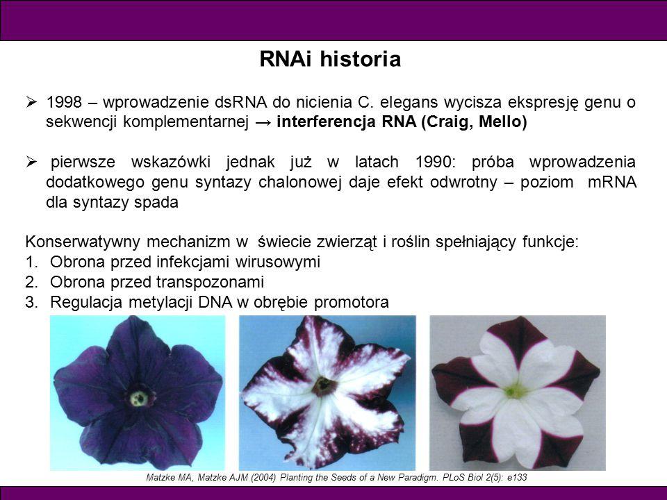 RNAi historia 1998 – wprowadzenie dsRNA do nicienia C. elegans wycisza ekspresję genu o sekwencji komplementarnej → interferencja RNA (Craig, Mello)