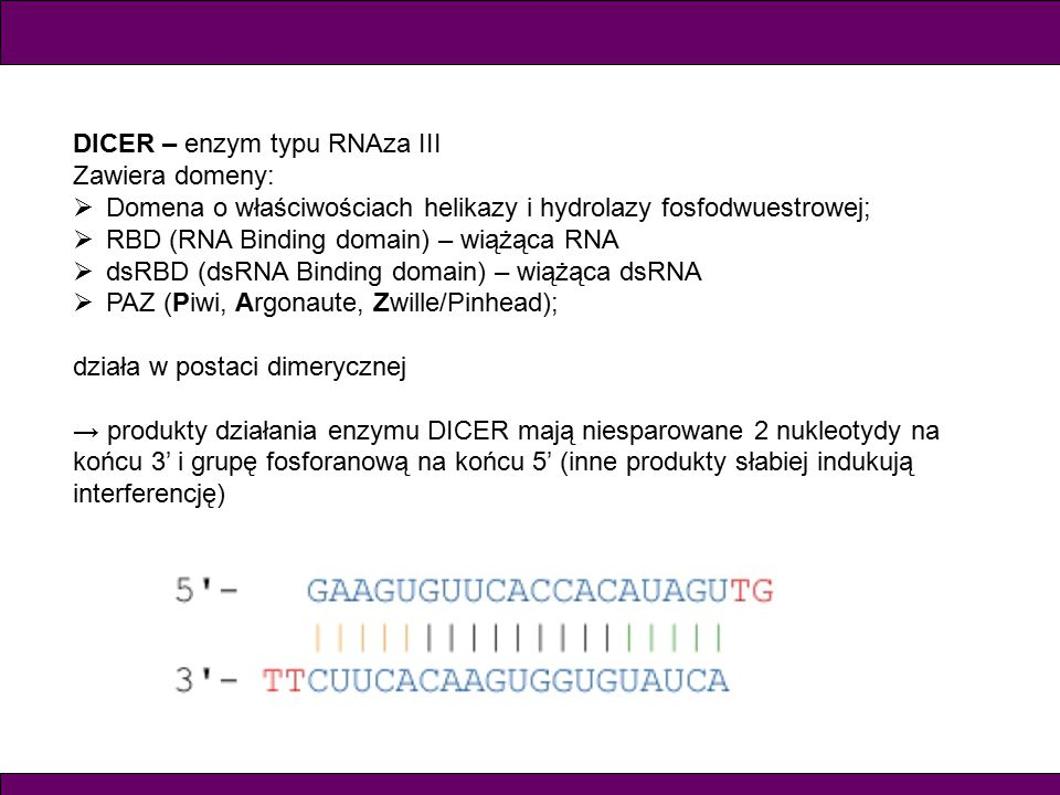 DICER – enzym typu RNAza III