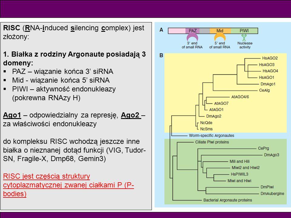RISC (RNA-induced silencing complex) jest złożony: