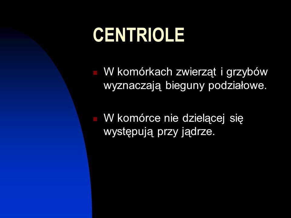 CENTRIOLE W komórkach zwierząt i grzybów wyznaczają bieguny podziałowe.