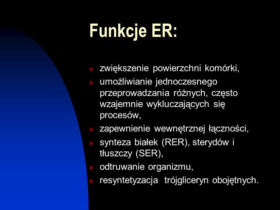 Funkcje ER: zwiększenie powierzchni komórki,