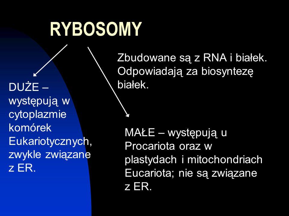 RYBOSOMY Zbudowane są z RNA i białek. Odpowiadają za biosyntezę białek.