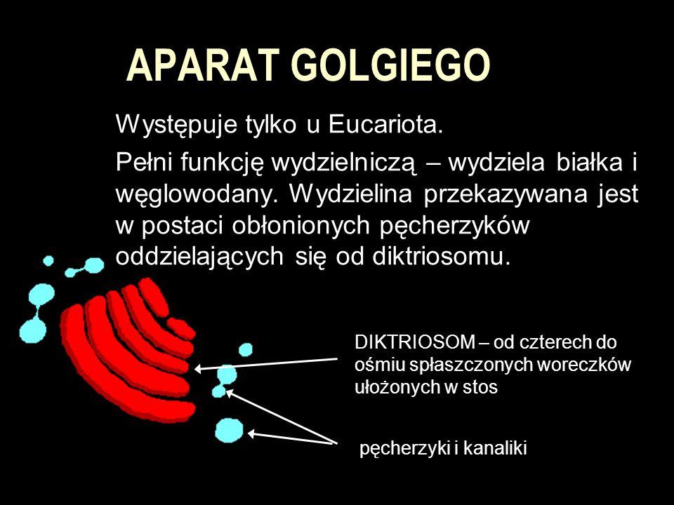 APARAT GOLGIEGO Występuje tylko u Eucariota.