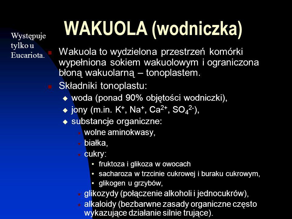 WAKUOLA (wodniczka) Występuje tylko u Eucariota.