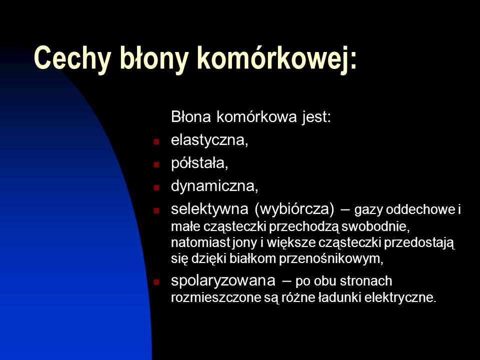 Cechy błony komórkowej: