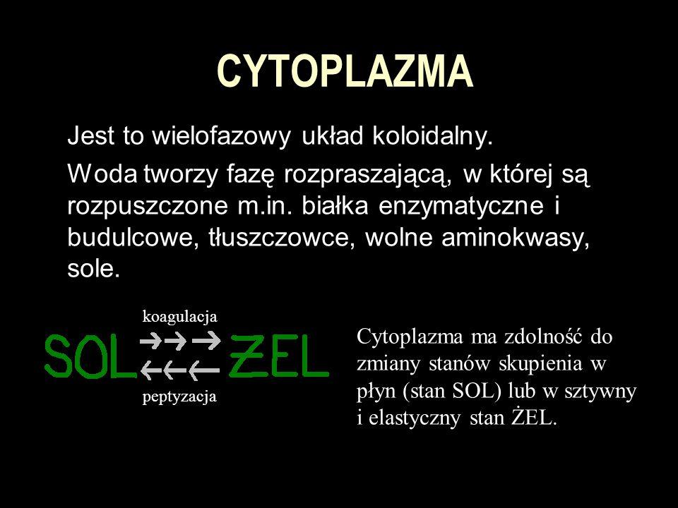 CYTOPLAZMA Jest to wielofazowy układ koloidalny.