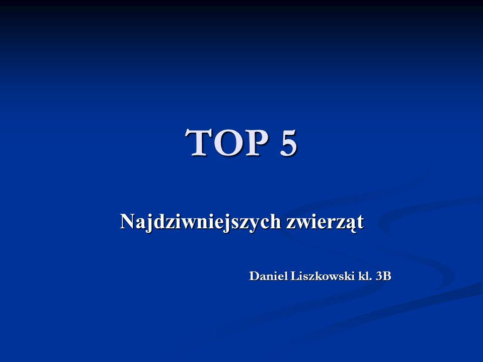 Najdziwniejszych zwierząt Daniel Liszkowski kl. 3B