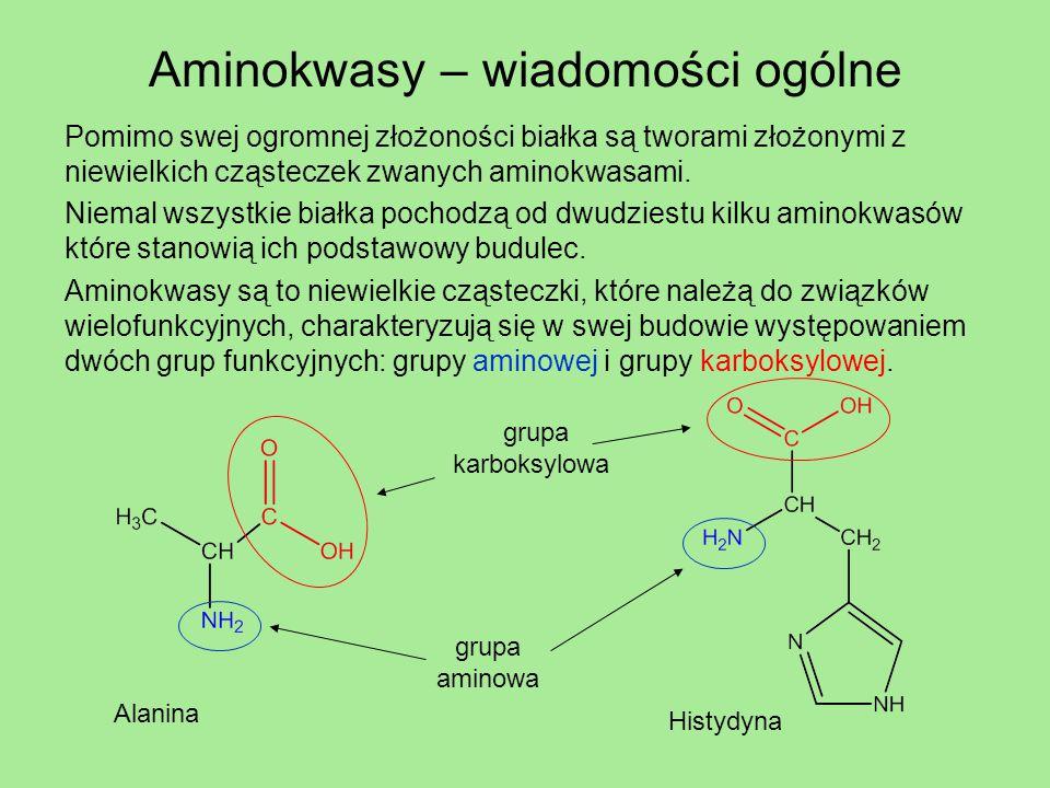Aminokwasy – wiadomości ogólne
