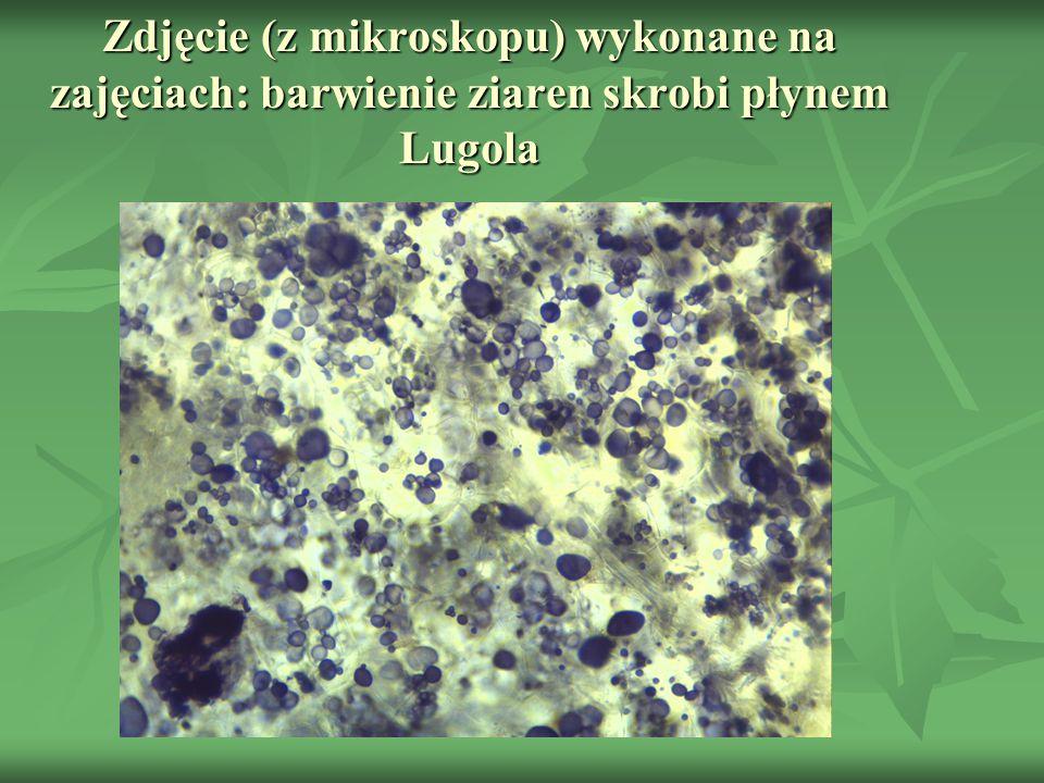 Zdjęcie (z mikroskopu) wykonane na zajęciach: barwienie ziaren skrobi płynem Lugola