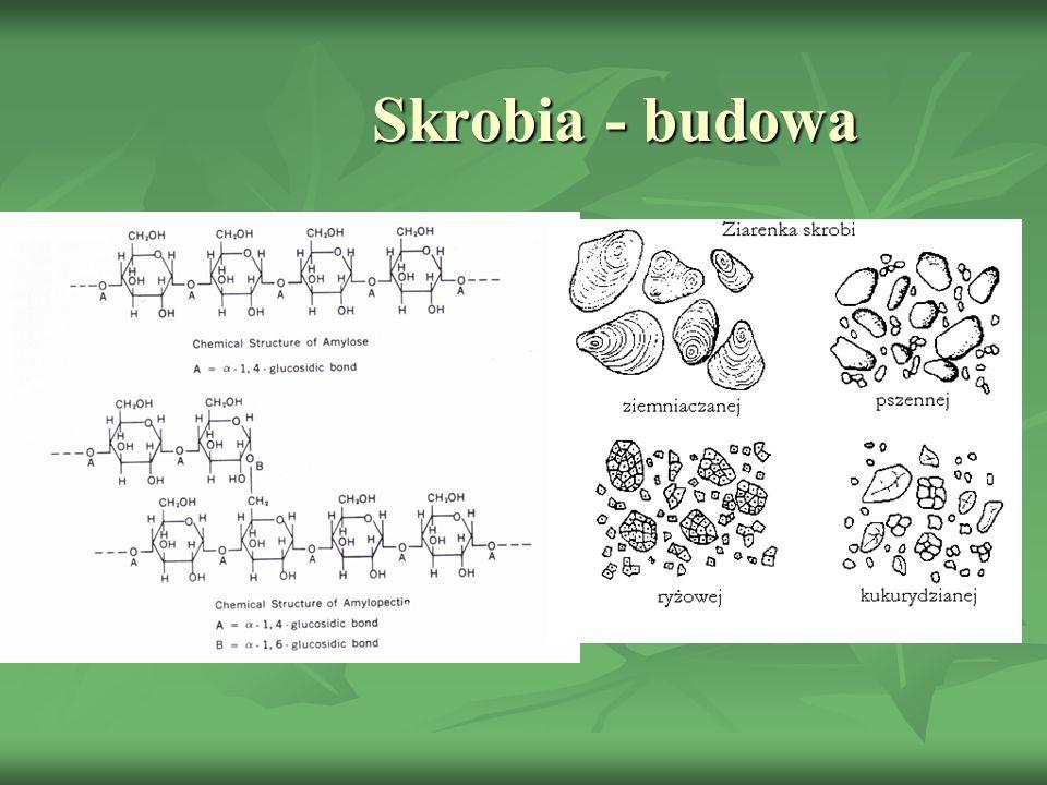 Skrobia - budowa