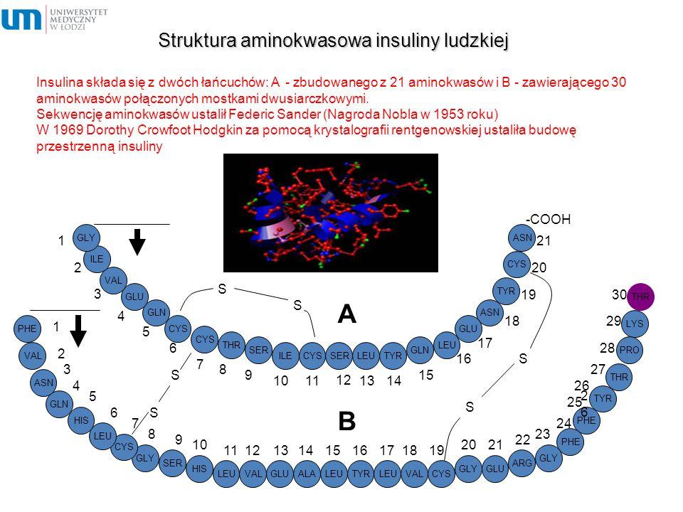 Struktura aminokwasowa insuliny ludzkiej