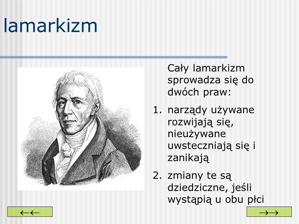 lamarkizm Cały lamarkizm sprowadza się do dwóch praw: