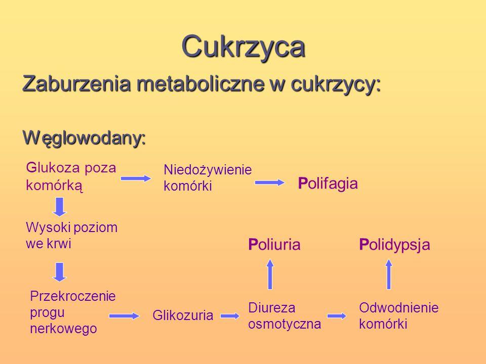 Cukrzyca Zaburzenia metaboliczne w cukrzycy: Węglowodany: Polifagia