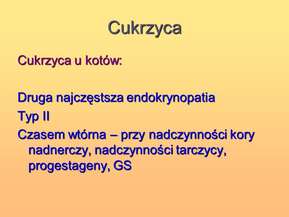 Cukrzyca Cukrzyca u kotów: Druga najczęstsza endokrynopatia Typ II