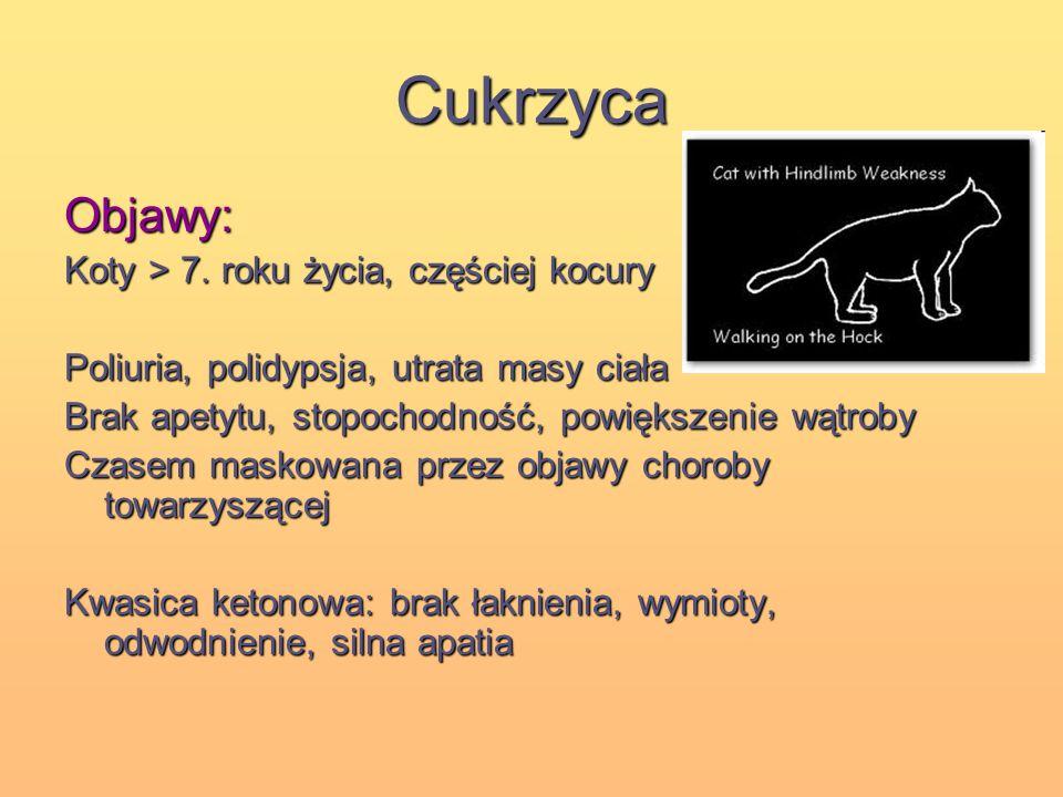 Cukrzyca Objawy: Koty > 7. roku życia, częściej kocury