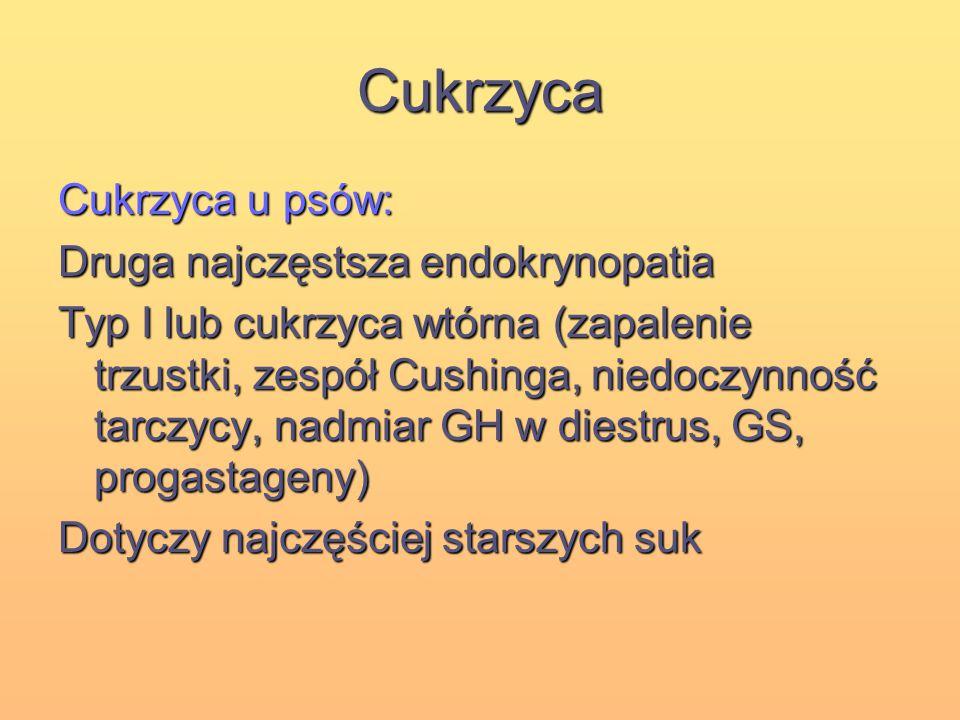 Cukrzyca Cukrzyca u psów: Druga najczęstsza endokrynopatia
