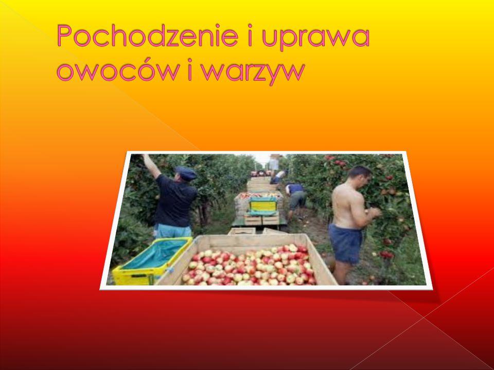 Pochodzenie i uprawa owoców i warzyw