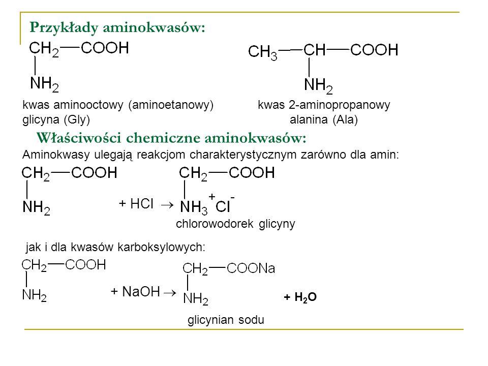 Przykłady aminokwasów: