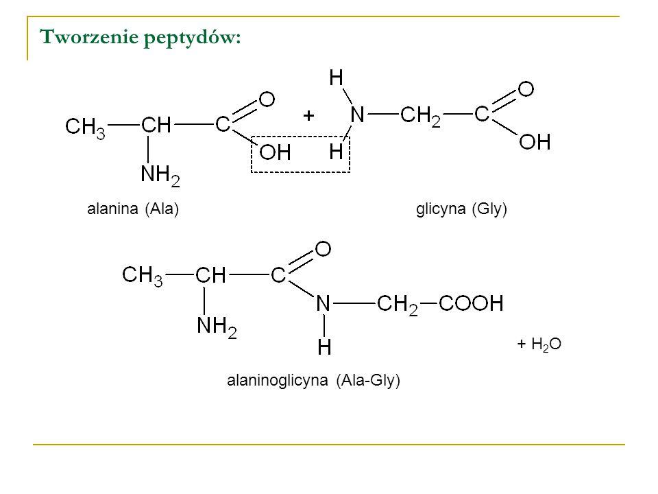 Tworzenie peptydów: alanina (Ala) glicyna (Gly) + H2O