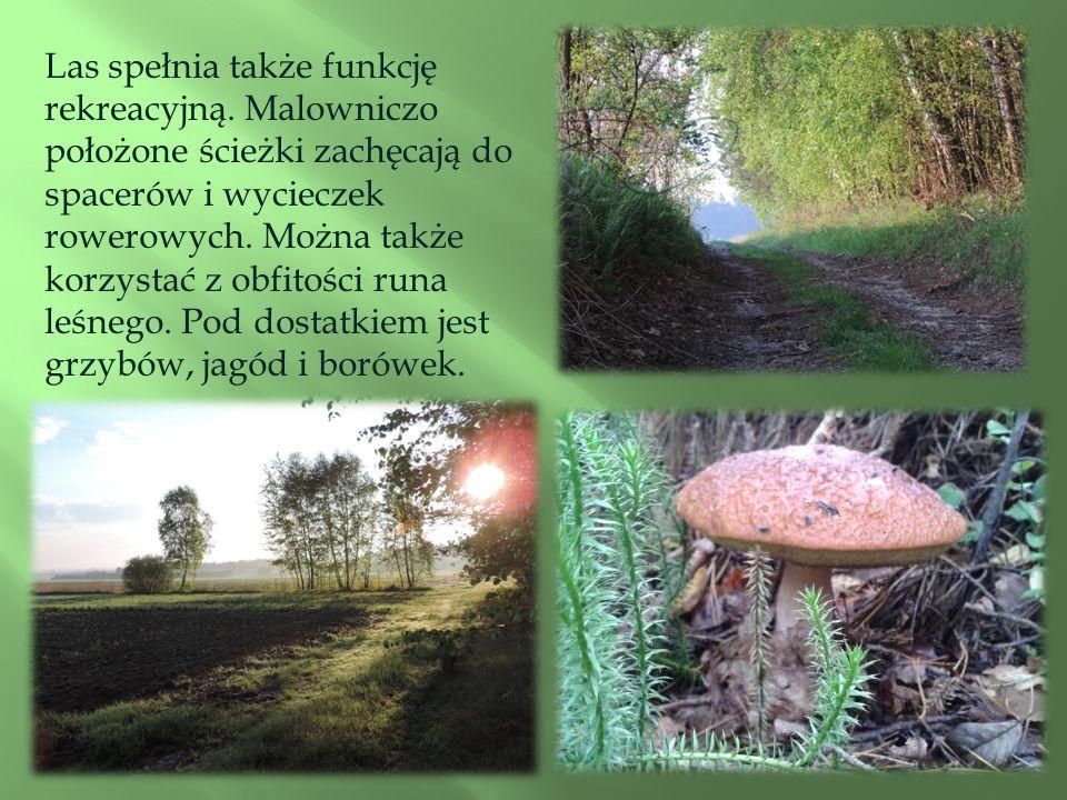 Las spełnia także funkcję rekreacyjną