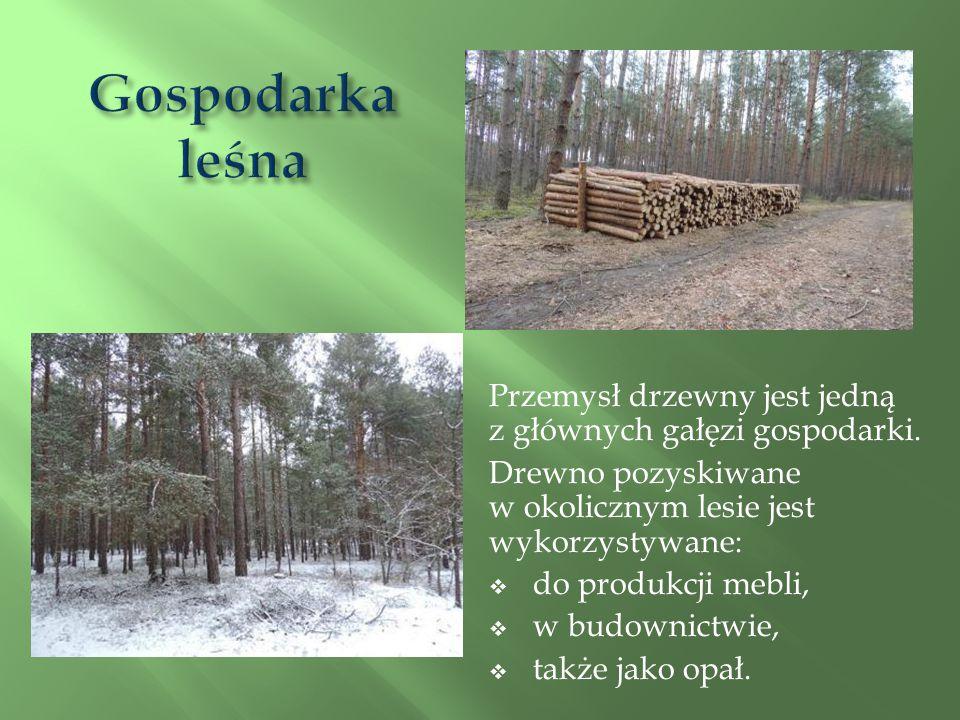 Gospodarka leśna Przemysł drzewny jest jedną z głównych gałęzi gospodarki.