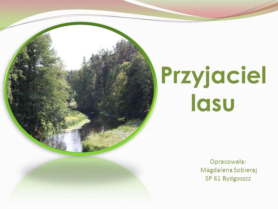 Przyjaciel lasu Opracowała: Magdalena Sobieraj SP 61 Bydgoszcz