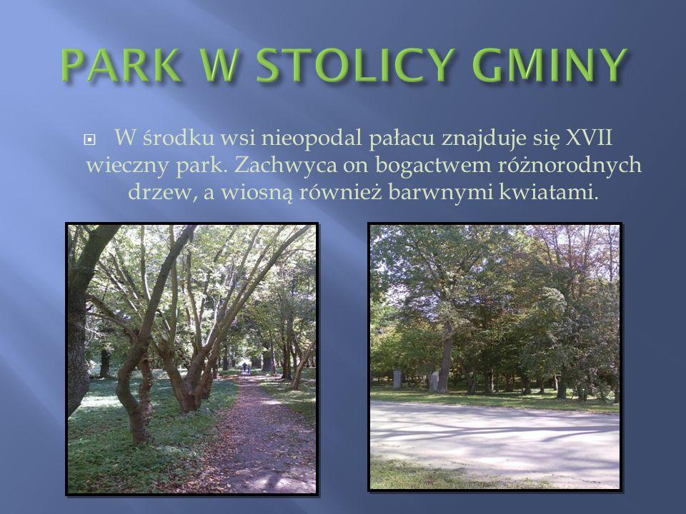 PARK W STOLICY GMINY