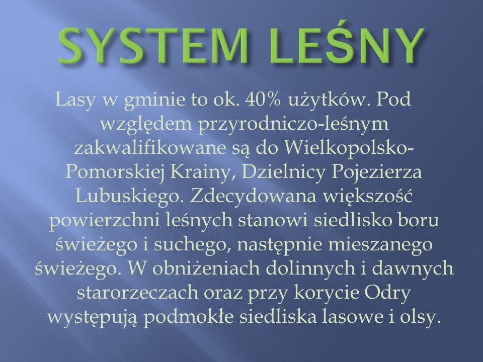 SYSTEM LEŚNY