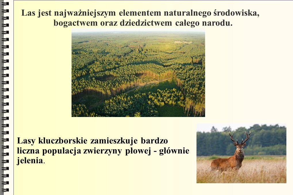 Las jest najważniejszym elementem naturalnego środowiska,