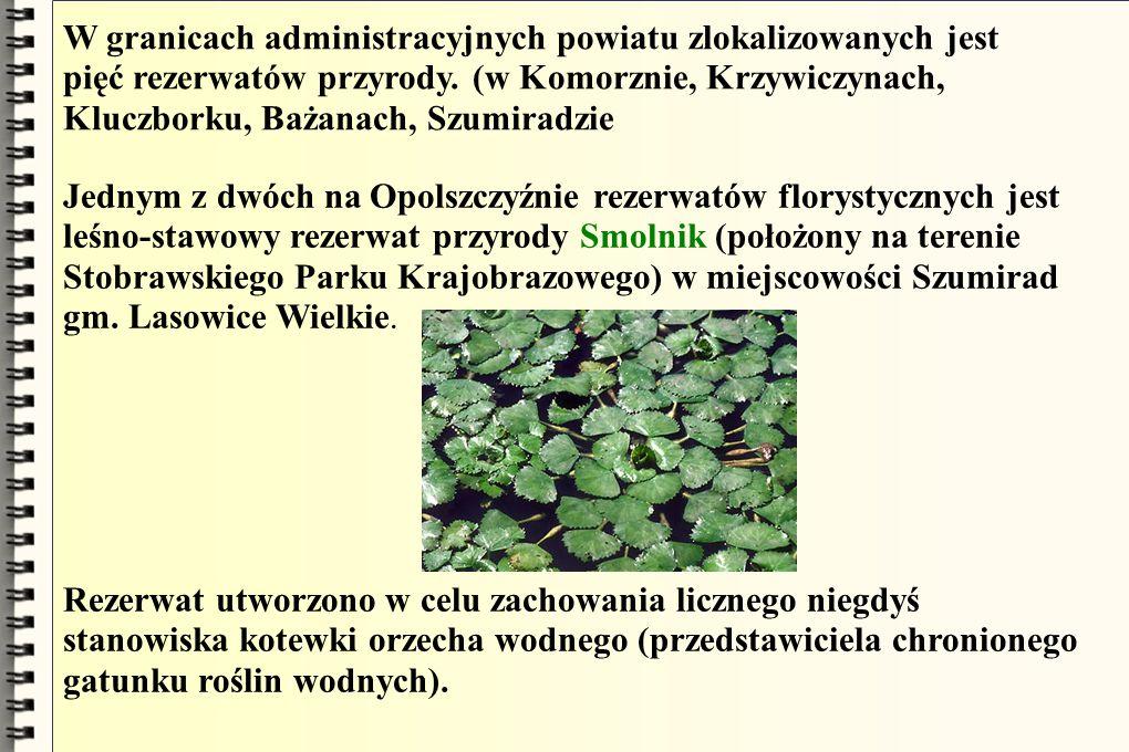 W granicach administracyjnych powiatu zlokalizowanych jest pięć rezerwatów przyrody. (w Komorznie, Krzywiczynach, Kluczborku, Bażanach, Szumiradzie