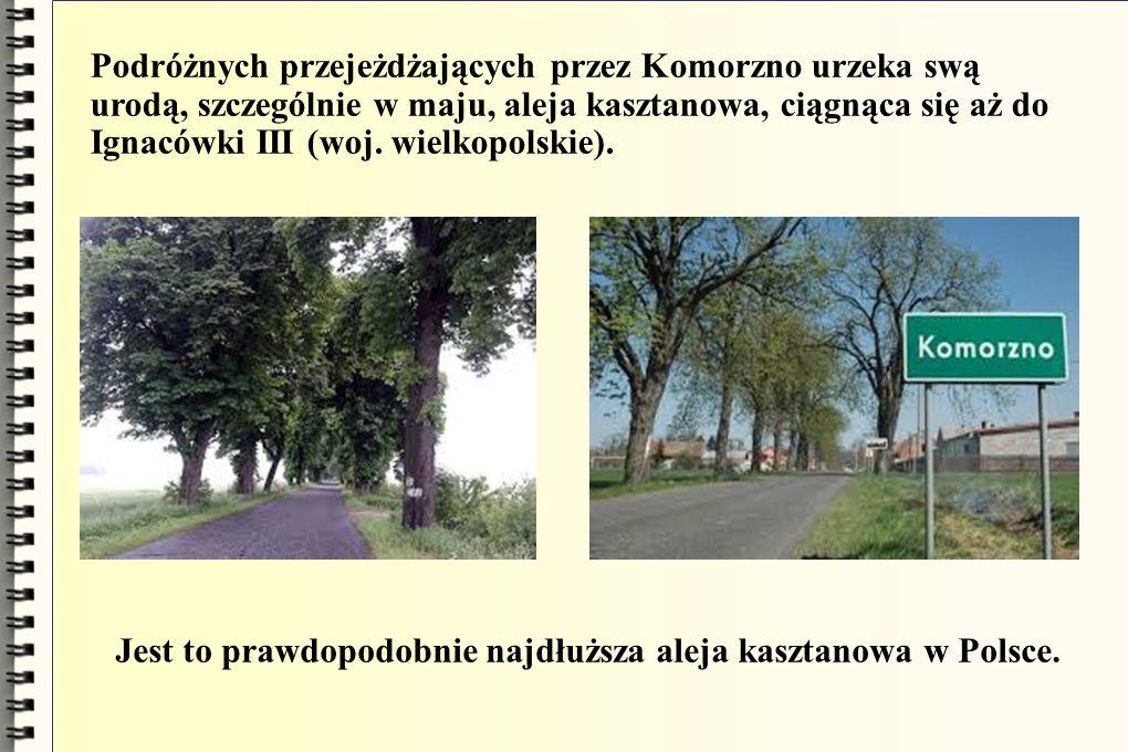 Podróżnych przejeżdżających przez Komorzno urzeka swą urodą, szczególnie w maju, aleja kasztanowa, ciągnąca się aż do Ignacówki III (woj. wielkopolskie).