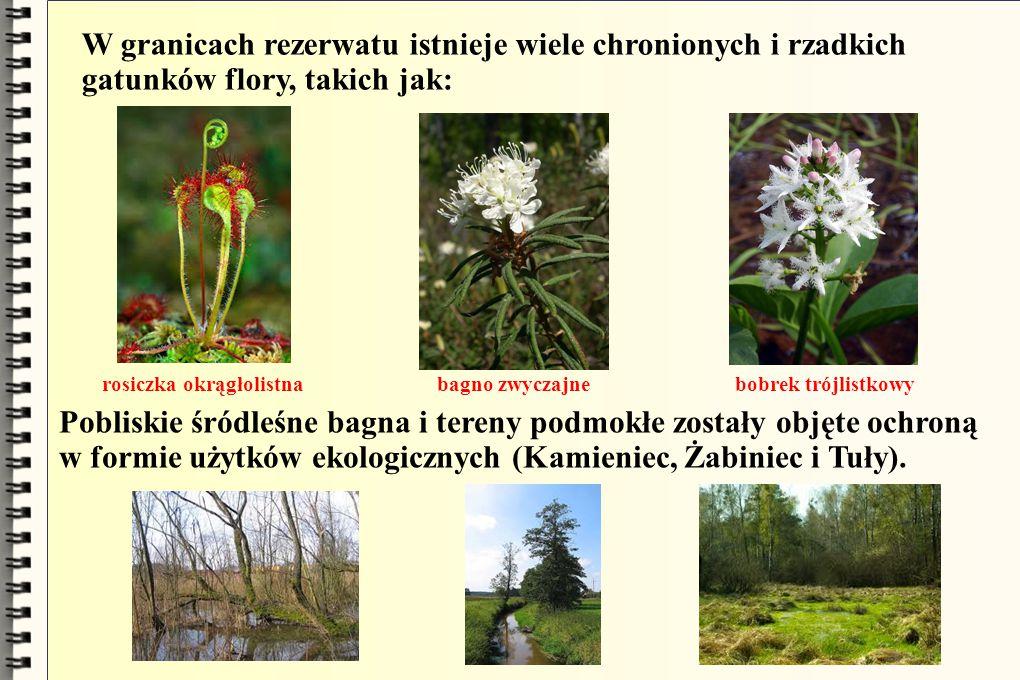 W granicach rezerwatu istnieje wiele chronionych i rzadkich gatunków flory, takich jak: