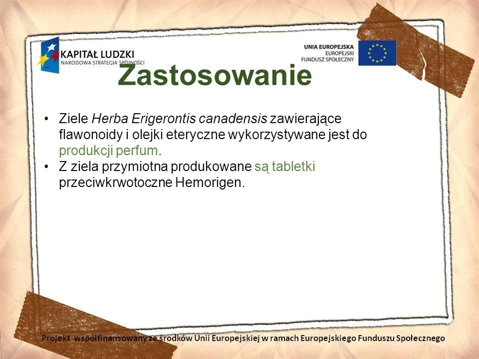Zastosowanie Ziele Herba Erigerontis canadensis zawierające flawonoidy i olejki eteryczne wykorzystywane jest do produkcji perfum.