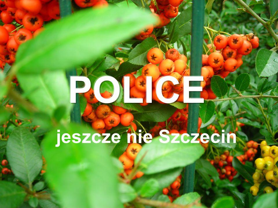POLICE jeszcze nie Szczecin