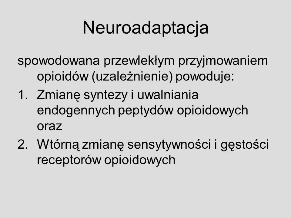Neuroadaptacja spowodowana przewlekłym przyjmowaniem opioidów (uzależnienie) powoduje: