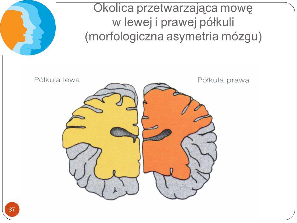 Okolica przetwarzająca mowę w lewej i prawej półkuli (morfologiczna asymetria mózgu)