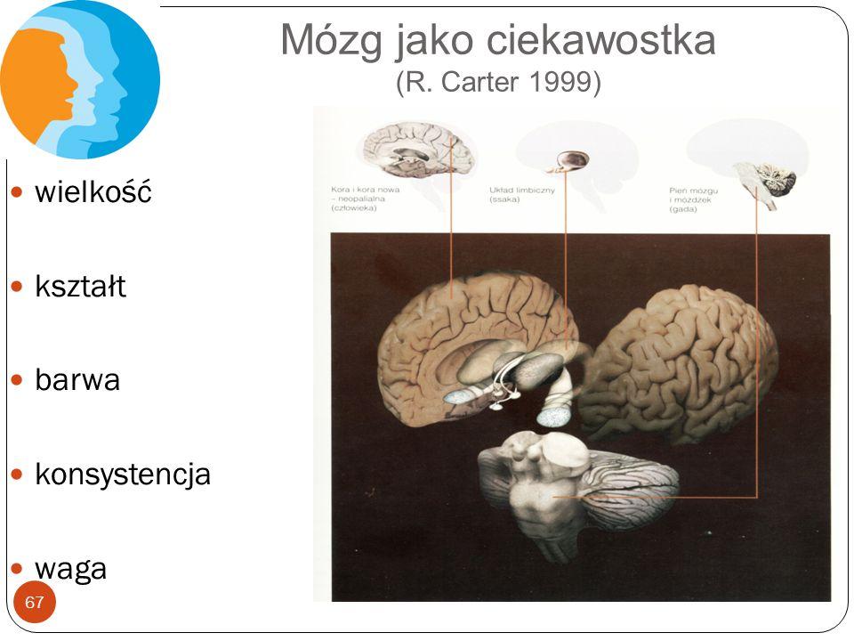 Mózg jako ciekawostka (R. Carter 1999)