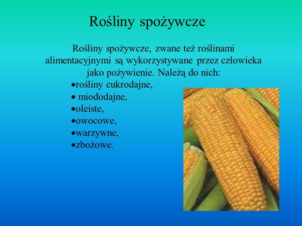 Rośliny spożywcze Rośliny spożywcze, zwane też roślinami alimentacyjnymi są wykorzystywane przez człowieka jako pożywienie. Należą do nich: