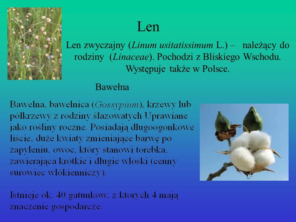 Len Len zwyczajny (Linum usitatissimum L.) – należący do rodziny (Linaceae). Pochodzi z Bliskiego Wschodu. Występuje także w Polsce.