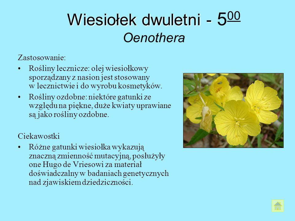 Wiesiołek dwuletni - 500 Oenothera