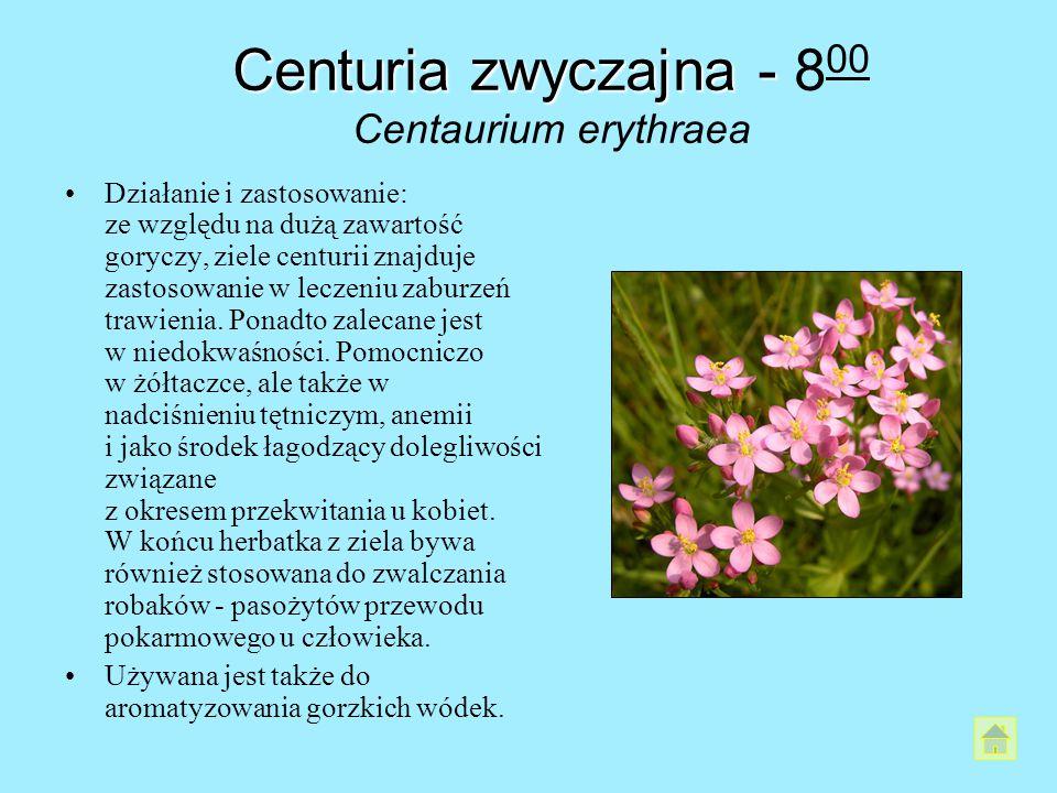 Centuria zwyczajna - 800 Centaurium erythraea
