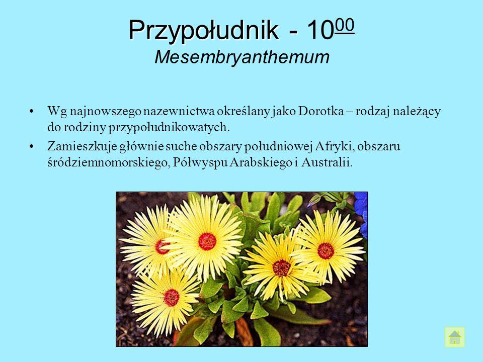Przypołudnik - 1000 Mesembryanthemum