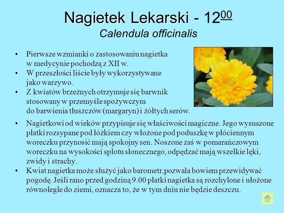 Nagietek Lekarski - 1200 Calendula officinalis