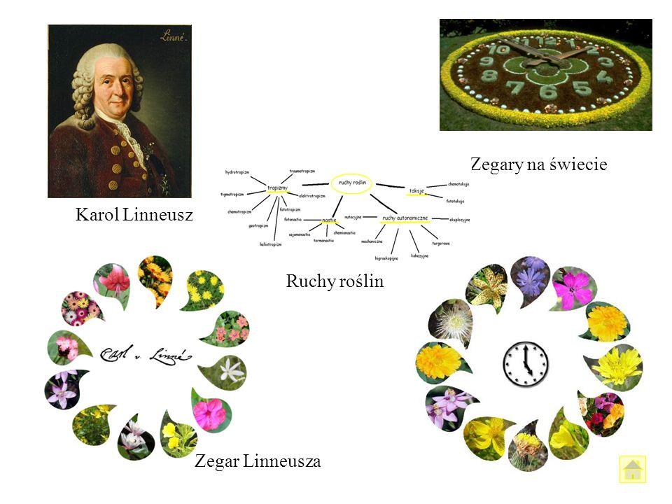 Karol Linneusz Zegary na świecie Ruchy roślin Zegar Linneusza